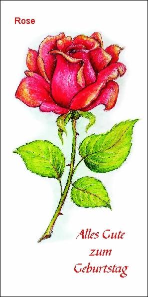 taktile Glückwunschkarte: Geburtstag / Geburtstagskarte / Rose